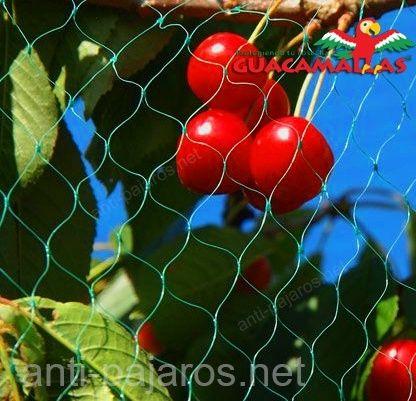 malla anti-pájaros GUACAMALLAS protegiendo cerezas