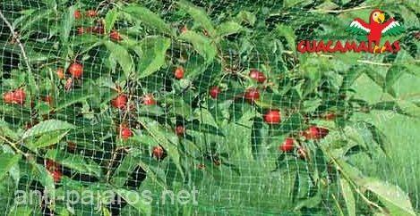 Malla anti pajaros en cultivo de cereza