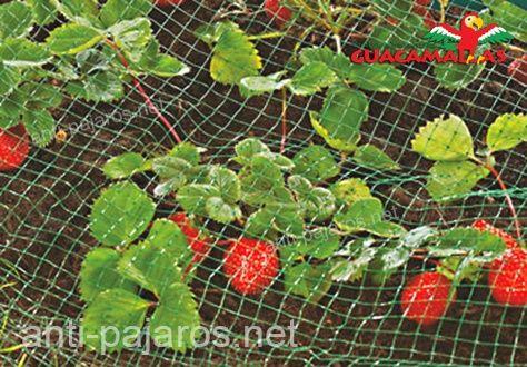 GUACAMALLAS malla anti pajaros protección de fresas