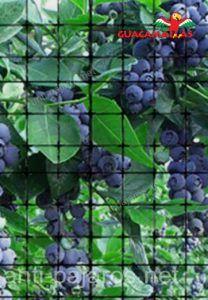 malla protectora sobre berries
