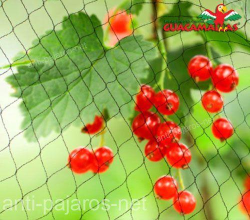 red protectora anti-pájaros aleja aves indeseadas en cultivos de grosella